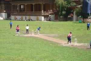 matting wicket